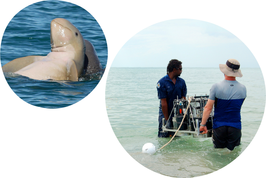 Small circle features snubfin dolphins from the Kimberley Marine Research Program by Christy Harrington, Murdoch University. Large circle features CSIRO researcher and Bardi Jawi Ranger working on the Kimberley Marine Research Program by Mat Vanderklift.